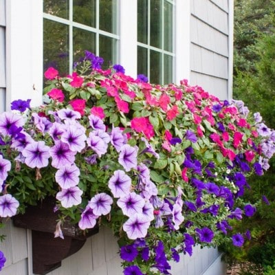 Window Box Tips – my former black thumb