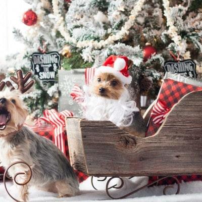 A Very Yorkie Christmas