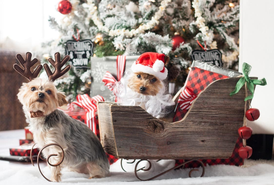 A very yorkie christmas the lilypad cottage for Christmas ideas for christmas cards