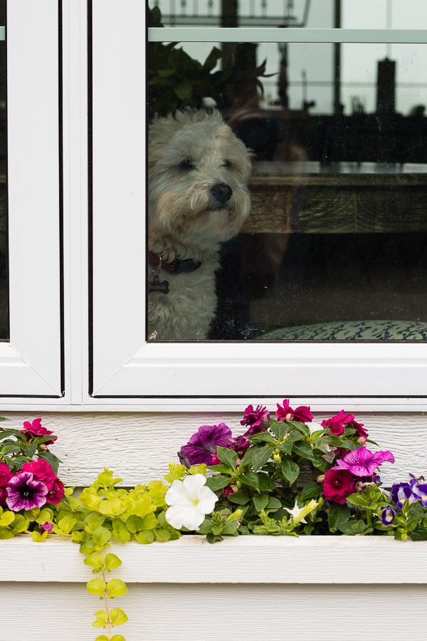 Window flower box tips