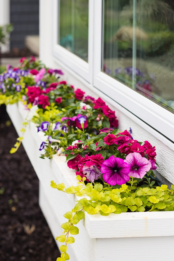 Flower box tips