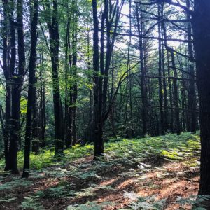 Friday Feels – Camping Adventures, Fall Clothes, Fave TV Show