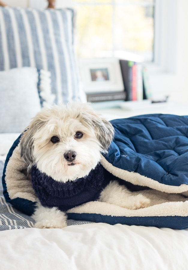 dog bed sleeping bag
