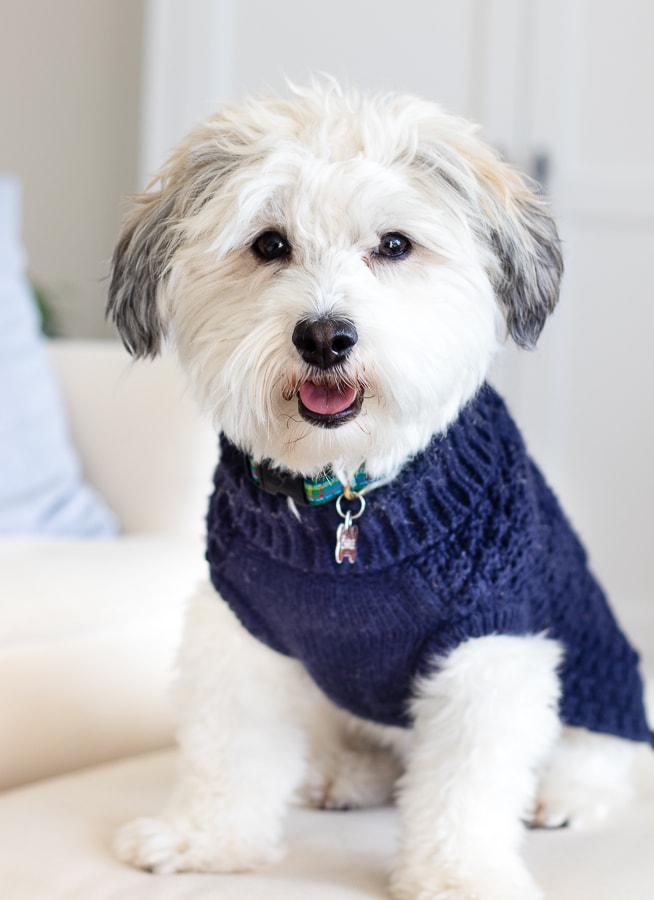 navy cable knit dog sweater