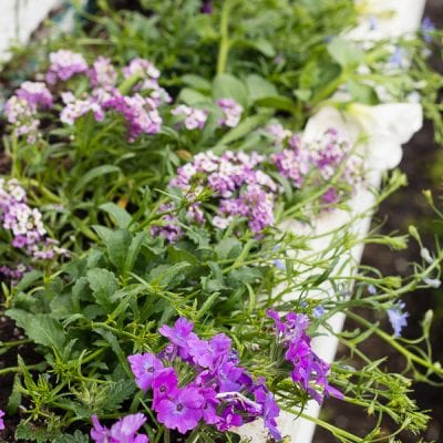 Purple and Blue Flower Boxes