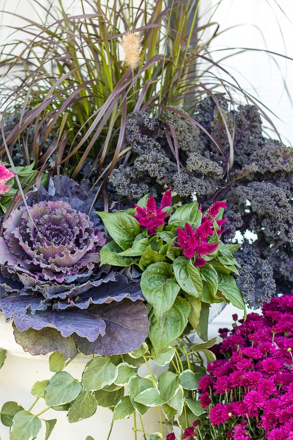 cabbage and kale fall planters