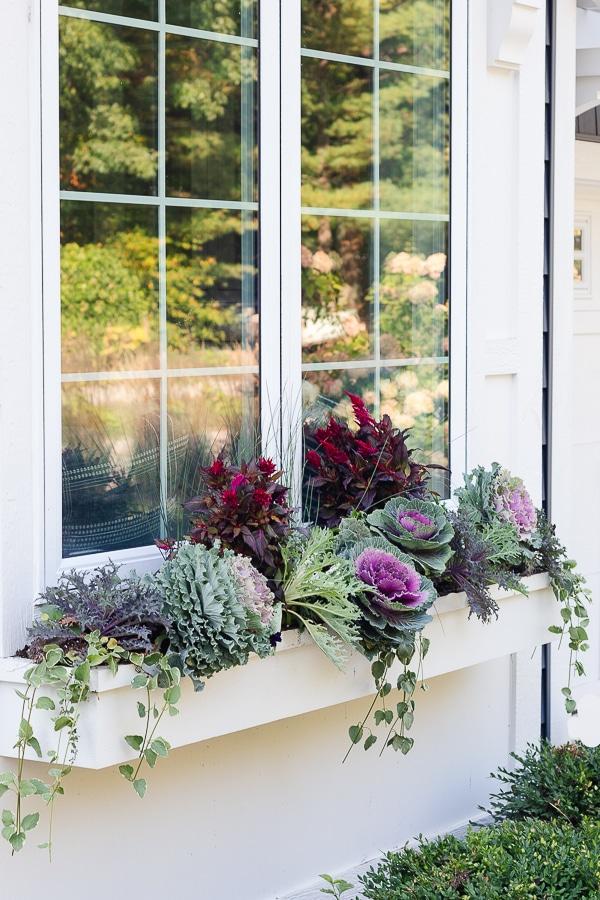 white window box purple flowers