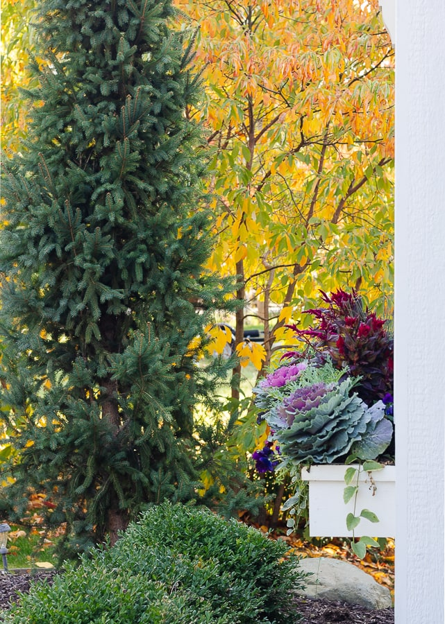 fall foliage and purple cabbage in white window box