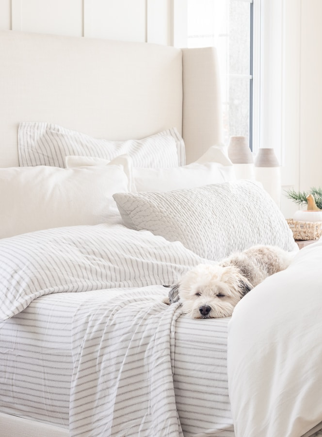 white bedding gray ticking sheets dog sleeping