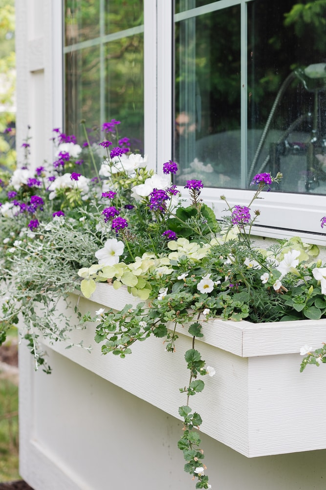 white flower box filled with white and purple flowers
