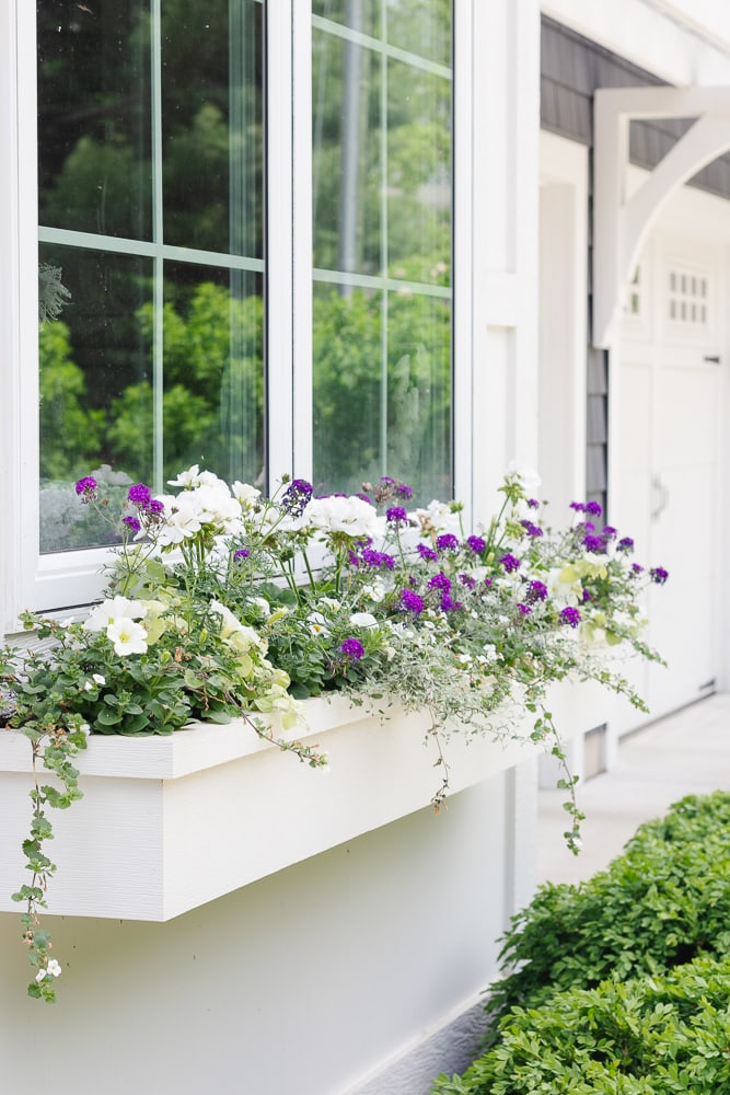 purple and white flower boxes